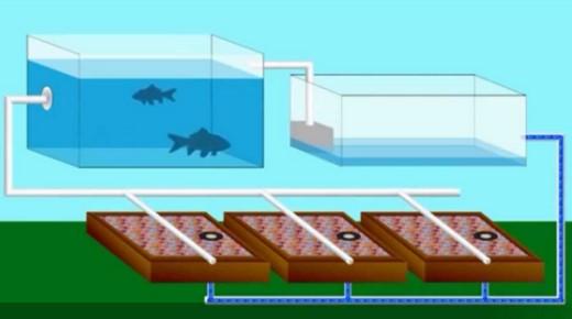 Pengertian aquaponik, Sistem Aquaponik, dan konsep Aquaponik